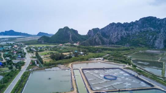 Superoxigenación en piscinas camaroneras por medio de aireación y plantas de oxigeno PSA
